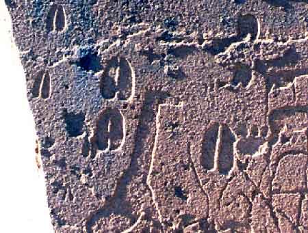 Tracks from Twyfelfontein