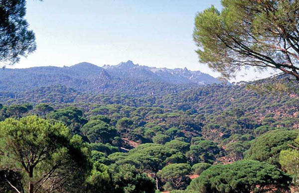 Fig. 19 – View from the Northeast on the pine forests of the Latmos with the mountain range and the peak in the background (photograph taken in 1994)