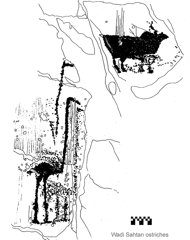 "Fig. 15 - Ostriches and bull. It is believed that the ostriches are mating. The bull has a big hump and can be identify as a type very near to the animal called ""Indian Bull"" - Wadi Sahtan - (drawing by Angelo Fossati)"