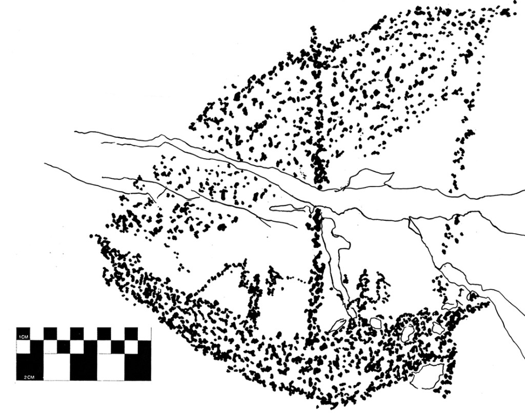 Fig. 16 - A typical Omani boat engraved on a rock at Wadi Al Hareem. These boats were used to trade   goods, like frankincense, from the internal part of the Arabian peninsula to the other countries of the gulf (drawing by Angelo Fossati)