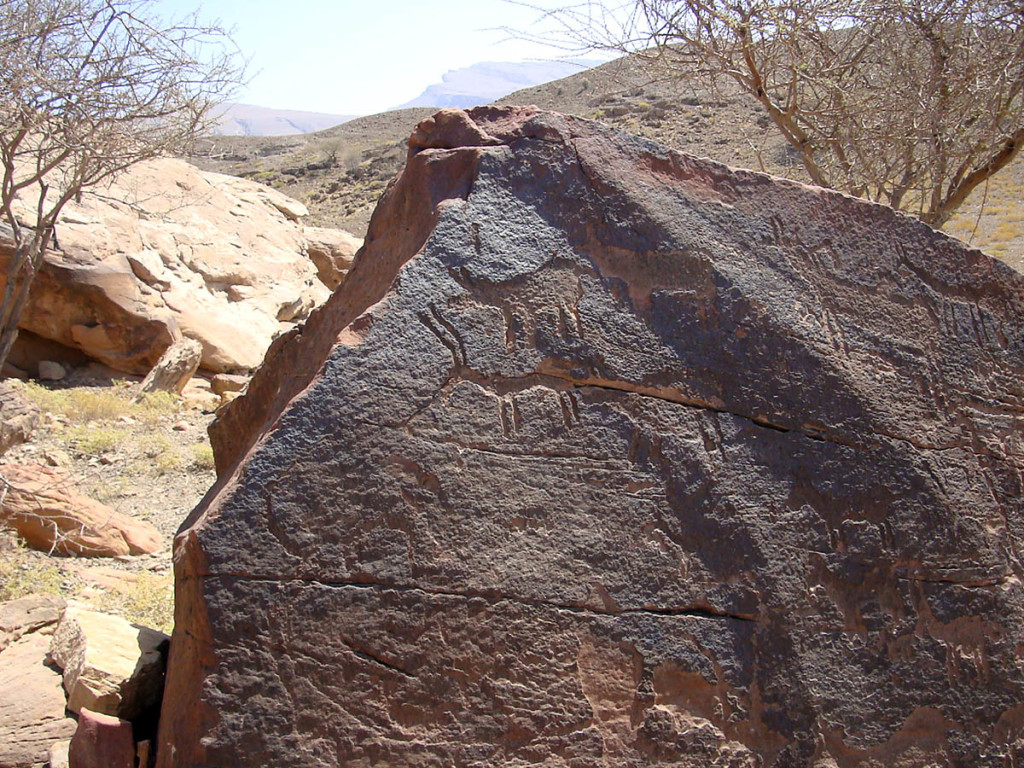 Fig. 3 - Animals (arabian gazelles and wild asses) engraved on a big boulder in Shenah - (photo by Angelo Fossati)