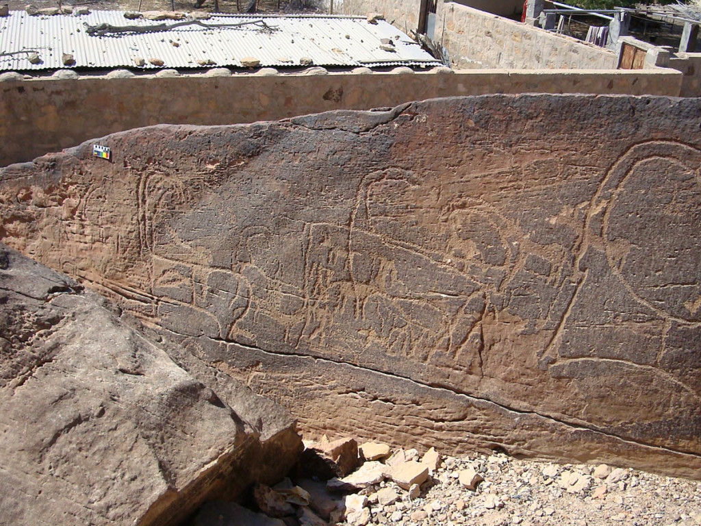 Fig. 4 - An heavily eroded  rock engraved with animal motives near the village of Shenah - (photo by Angelo Fossati)
