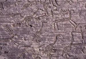 Fig. 11 Naquane, roccia N. 1, cervi e ornitormorfi (archivio Le Orme dell'Uomo)