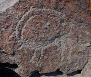 Fig. 17 Figura di capride. Si riconoscono gli anelli di accrescimento delle corna, la barba, la coda e il sesso (foto: Dario Sigari)